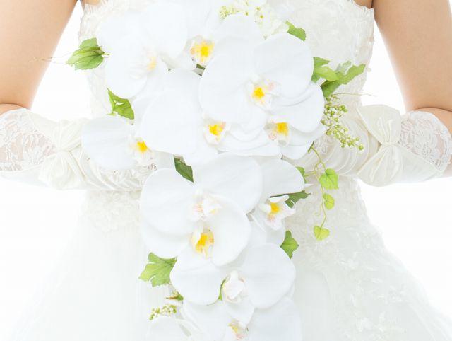 100倍楽しい胡蝶蘭との付き合い方。魅力のすべてを徹底解明!