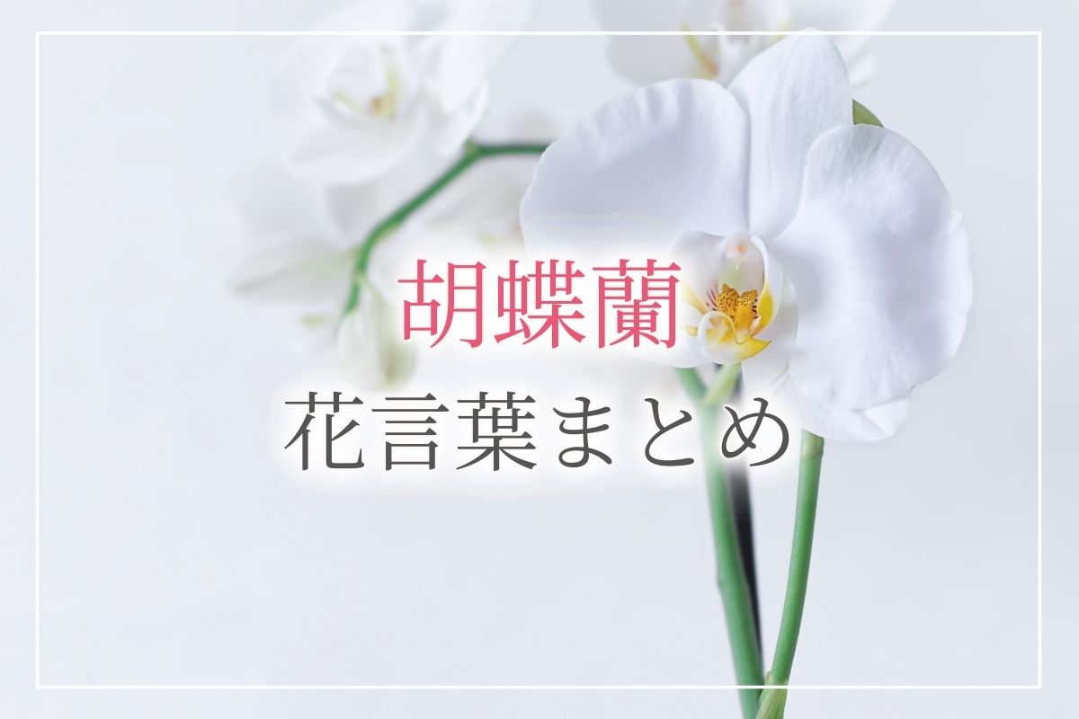 胡蝶蘭花言葉アイキャッチ画像