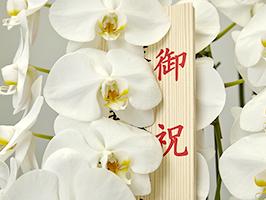 胡蝶蘭はなぜ高いのに選ばれるのかイメージ