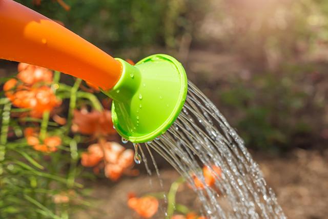 胡蝶蘭を枯らさない水やり方法