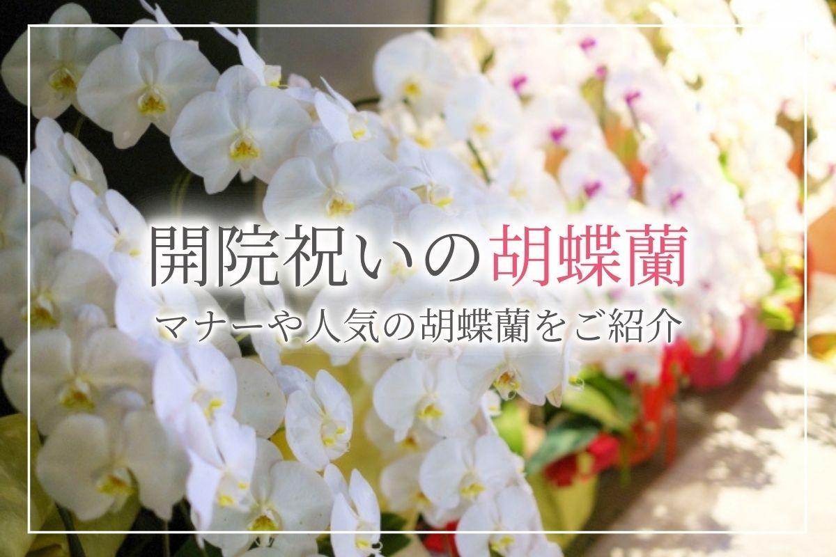 【絶対喜ばれる】開院祝いに人気の胡蝶蘭ランキングTOP3!相場やマナーのご紹介
