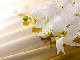 あなたは知ってる?お歳暮に贈ると喜ばれるお花「胡蝶蘭」