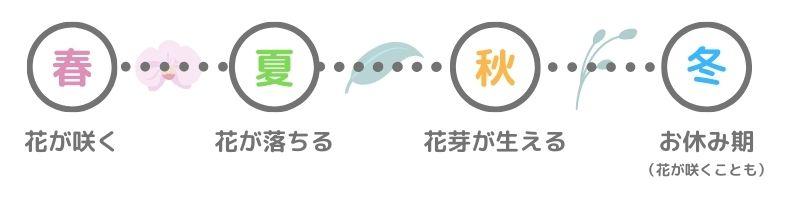 胡蝶蘭の1年