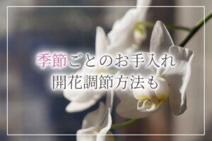 胡蝶蘭季節アイキャッチ