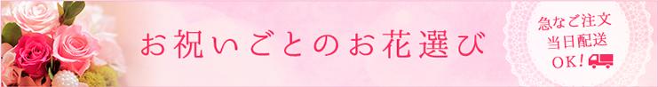 お祝いごとの花選び_胡蝶蘭