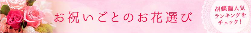 オフィスギフトの胡蝶蘭