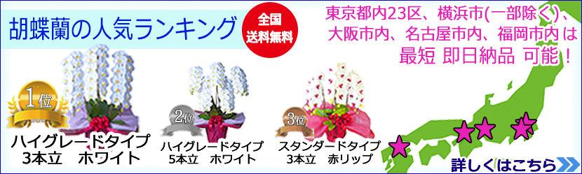 胡蝶蘭の人気ランキング