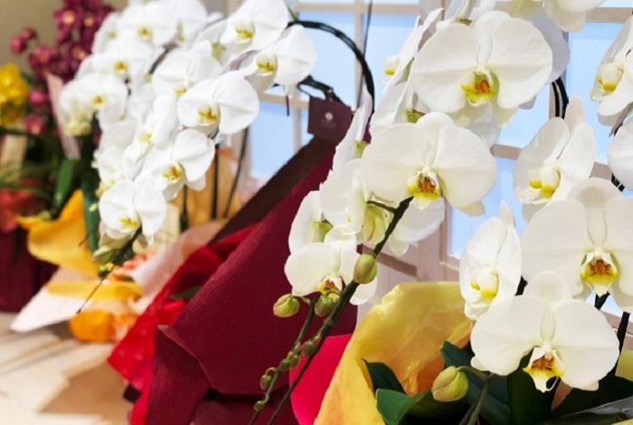 上場・一部昇格祝いに贈るお花は胡蝶蘭がベスト!選び方・相場・マナーを紹介