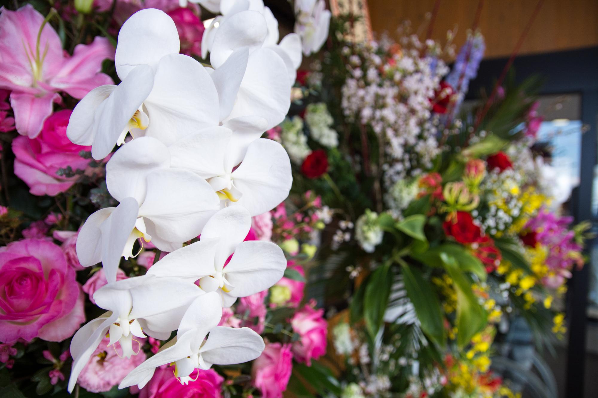 胡蝶蘭の選び方を徹底解説。種類と費用相場について