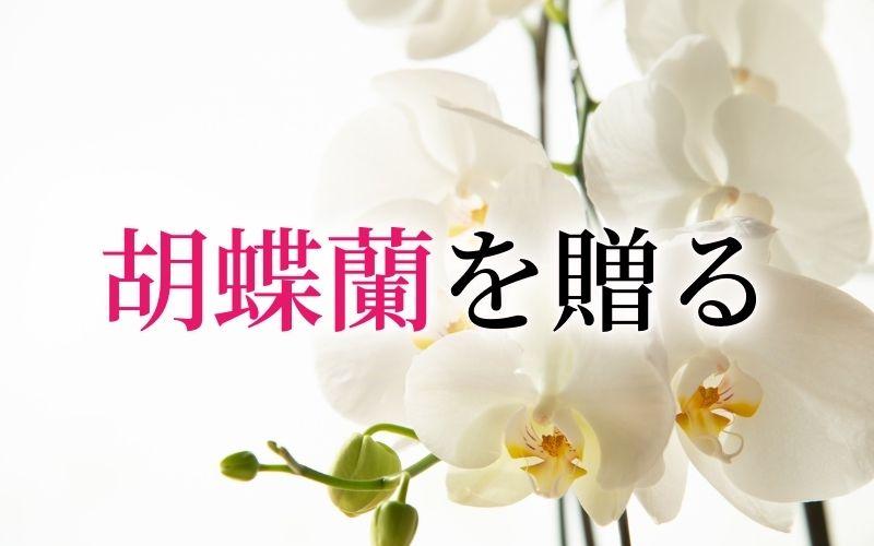 胡蝶蘭を贈る