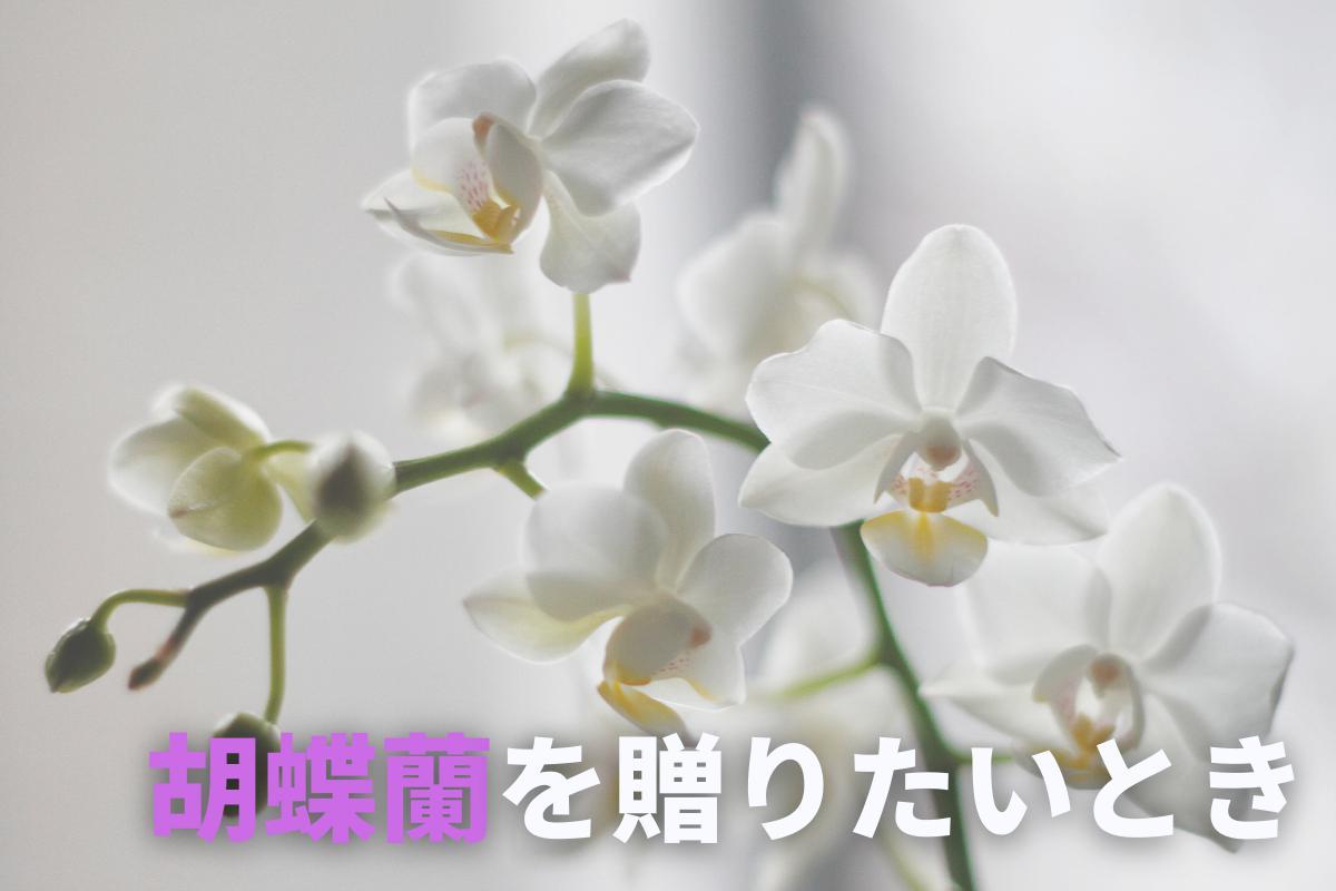 胡蝶蘭を贈りたいとき