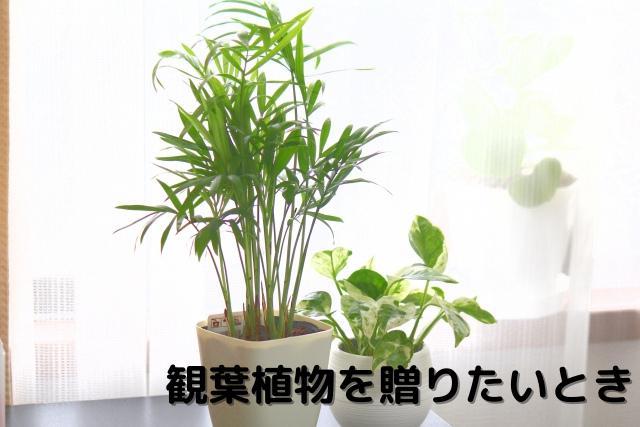観葉植物を贈りたいとき