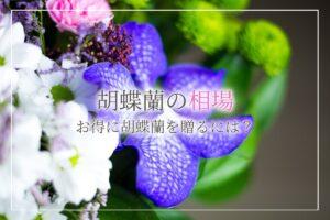 胡蝶蘭の相場