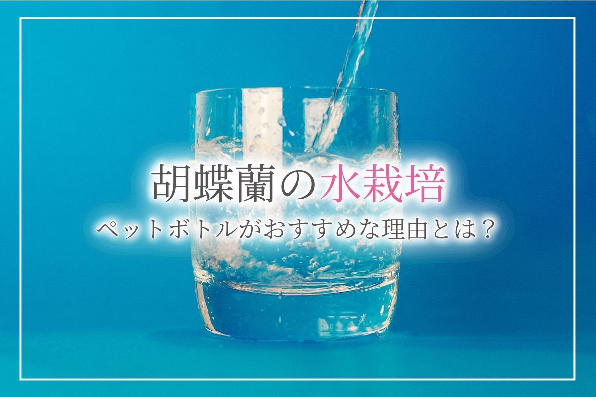 胡蝶蘭を水栽培する方法!ペットボトルでの水栽培がおすすめである理由とは?注意点についても解説