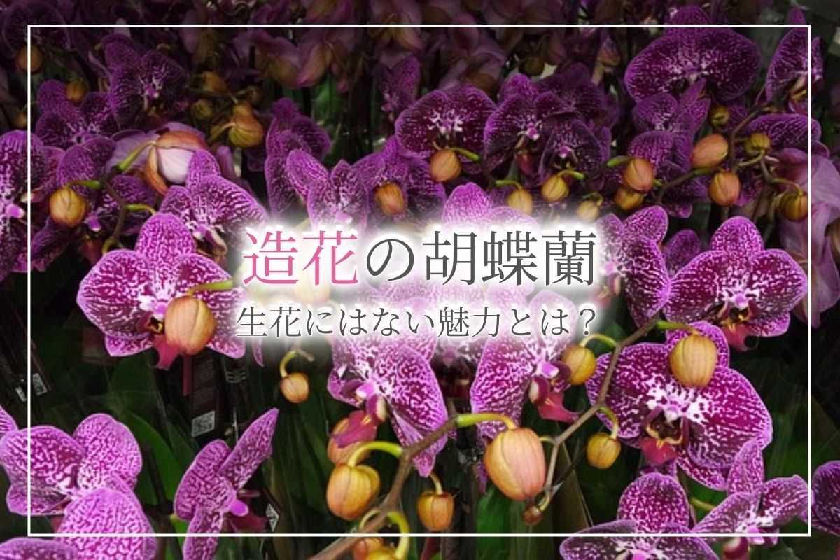光触媒加工の造花の胡蝶蘭は空気清浄効果アリ!お祝いとして贈るメリットや価格のほか、生花にはない魅力について解説