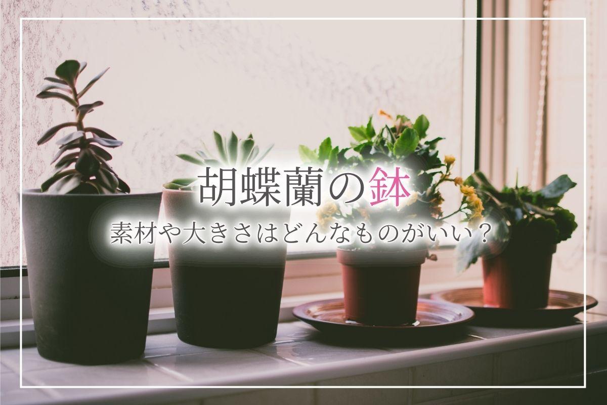 胡蝶蘭の鉢はどんなものを選べばいい?手入れや植え替えがやりやすい素材の鉢について紹介!