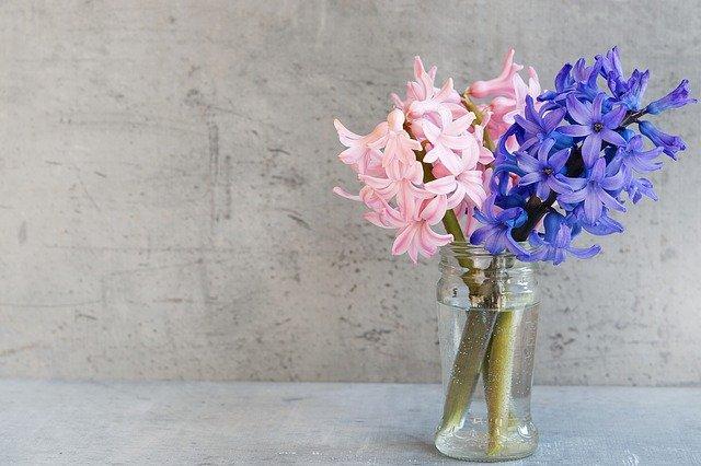 青とピンクのヒヤシンスの切り花