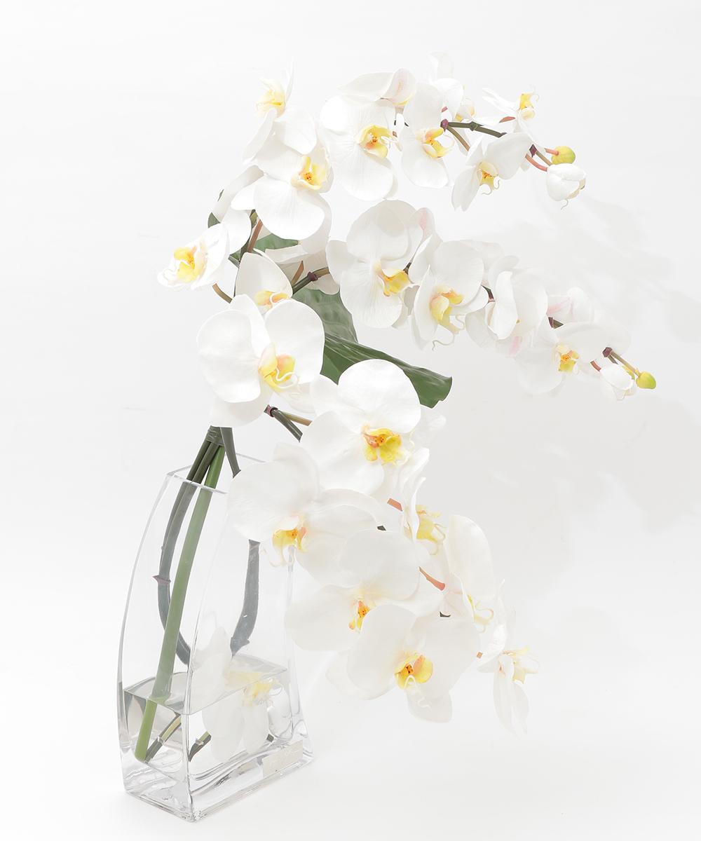 【エミリオ ロバ】アレンジメントフラワー ファレノプシス  TTNTB56